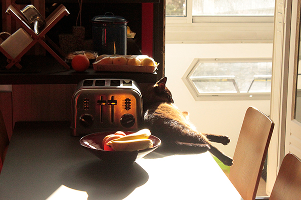 Cat in the sun, chat au soleil